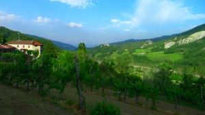 cool-retreats-vineyard